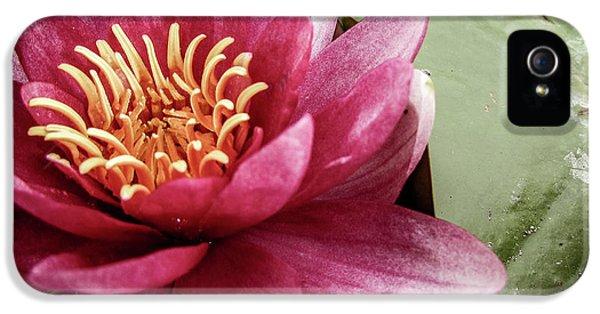 iPhone 5s Case - Lotus by Cesar Vieira