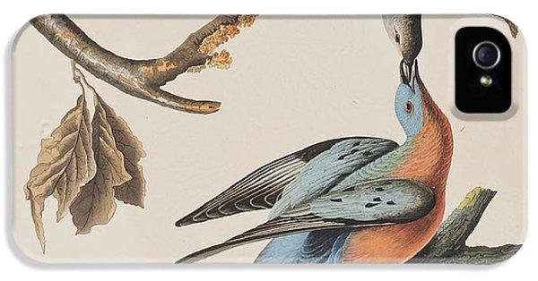 Passenger Pigeon IPhone 5s Case by John James Audubon