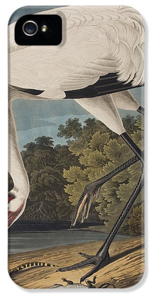 Whooping Crane IPhone 5s Case
