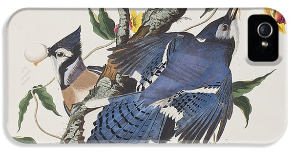 Blue Jay IPhone 5s Case by John James Audubon