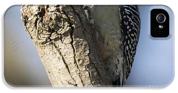 Red-bellied Woodpecker IPhone 5s Case by Ricky L Jones