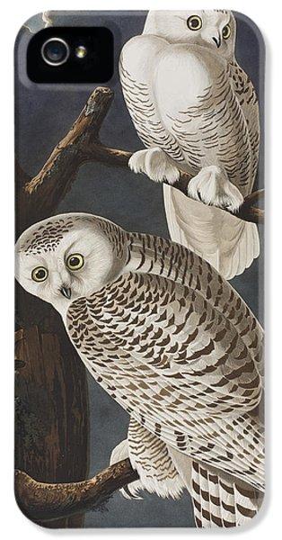 Owl iPhone 5s Case - Snowy Owl by John James Audubon