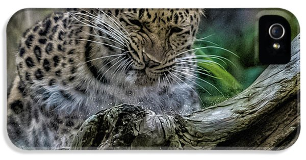 Amur Leopard IPhone 5s Case by Martin Newman