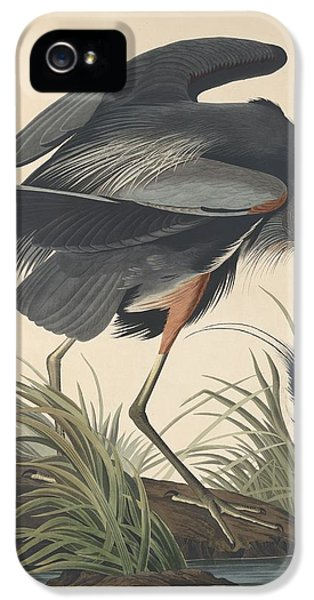 Ibis iPhone 5s Case - Great Blue Heron by Dreyer Wildlife Print Collections