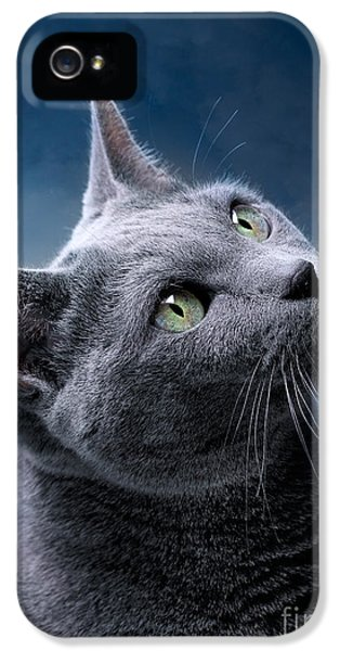 Cats iPhone 5s Case - Russian Blue Cat by Nailia Schwarz