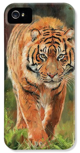 Amur Tiger IPhone 5s Case by David Stribbling