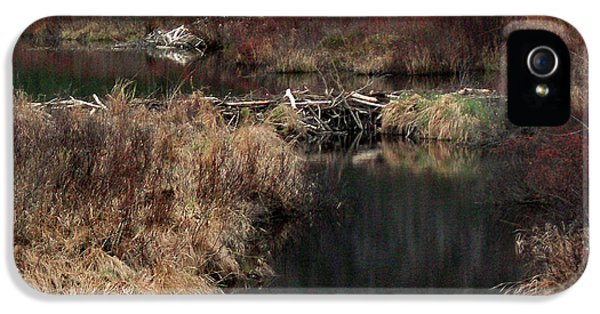 A Beaver's Work IPhone 5s Case by Skip Willits