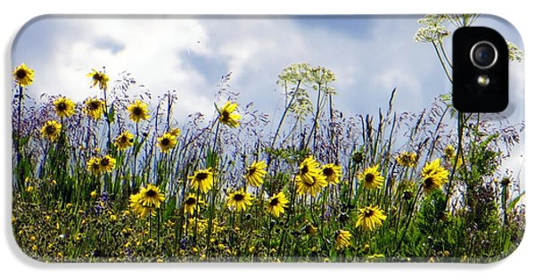 A Daisy Day IPhone 5s Case by Karen Shackles