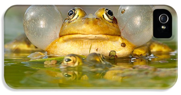 A Frog's Life IPhone 5s Case by Roeselien Raimond
