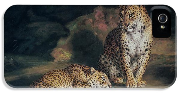 Cheetah iPhone 5s Case - A Pair Of Leopards by William Huggins