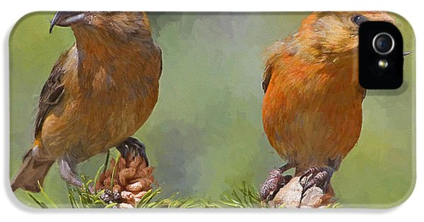 Crossbill iPhone 5s Case - A Pair Of Male Red Crossbills - Painted by Ericamaxine Price