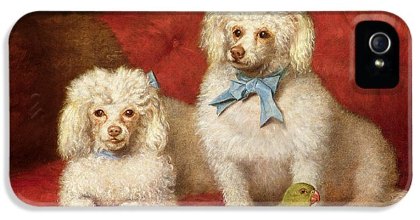 A Pair Of Poodles IPhone 5s Case