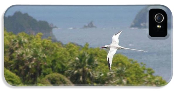 iPhone 5s Case - A Red-billed Tropicbird (phaethon by John Edwards