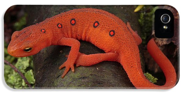 A Red Eft Crawls On The Forest Floor IPhone 5s Case