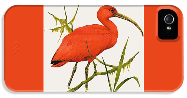 A Scarlet Ibis From South America IPhone 5s Case