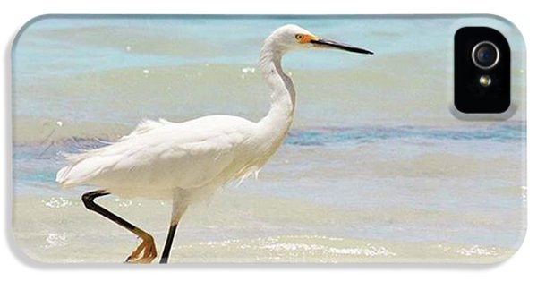 iPhone 5s Case - A Snowy Egret (egretta Thula) At Mahoe by John Edwards