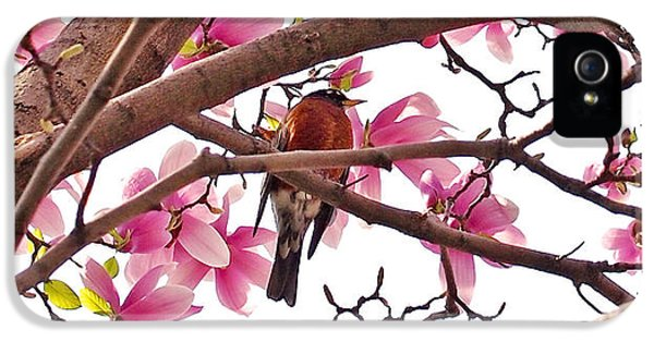 A Songbird In The Magnolia Tree - Square IPhone 5s Case