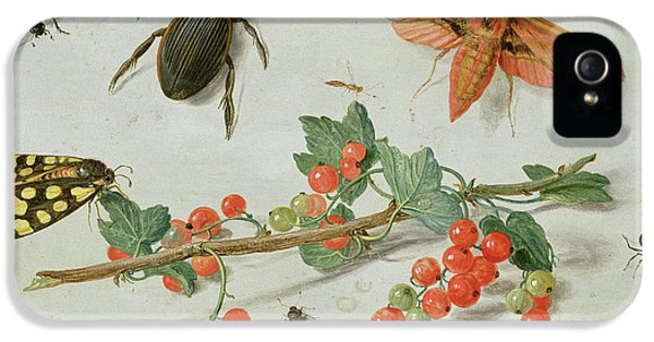Magpies iPhone 5s Case - A Sprig Of Redcurrants With An Elephant Hawk Moth, A Magpie Moth And Other Insects, 1657 by Jan Van Kessel