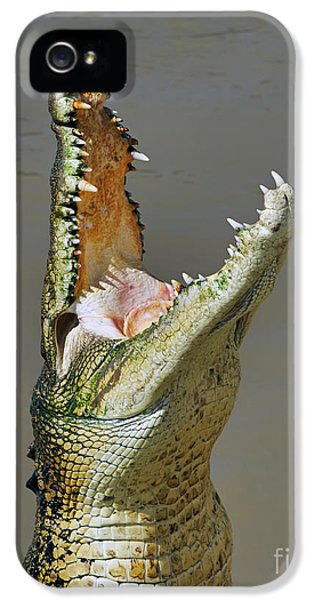 Crocodile iPhone 5s Case - Adelaide River Crocodile by Bill  Robinson