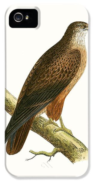 African Buzzard IPhone 5s Case by English School
