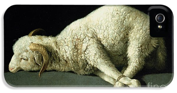 Sheep iPhone 5s Case - Agnus Dei by Francisco de Zurbaran
