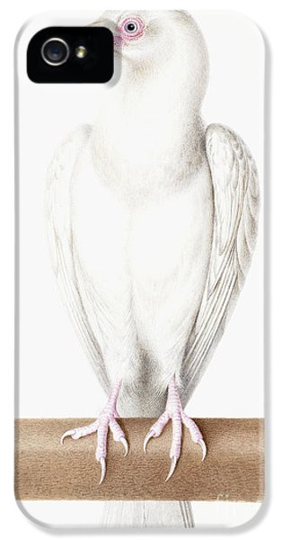 Albino Crow IPhone 5s Case by Nicolas Robert