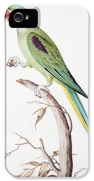 Alexandrine Parakeet IPhone 5s Case by Nicolas Robert