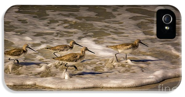 Sandpiper iPhone 5s Case - All Together Now by Marvin Spates
