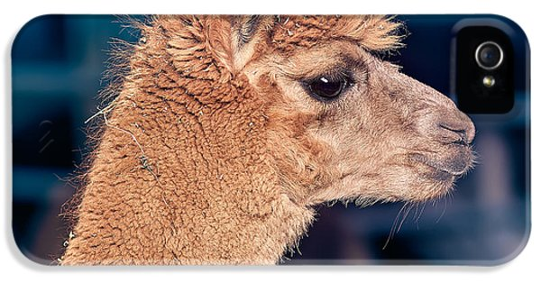 Alpaca Wants To Meet You IPhone 5s Case by TC Morgan