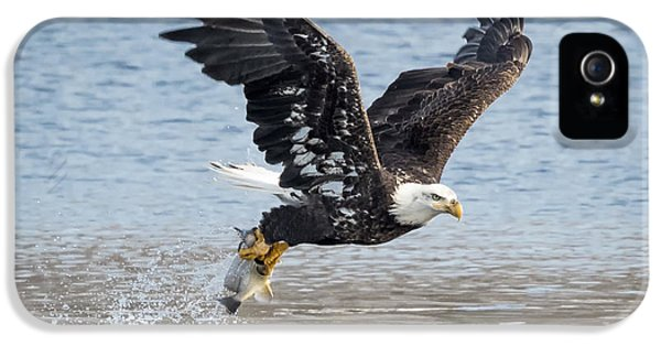 American Bald Eagle Taking Off IPhone 5s Case by Ricky L Jones