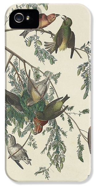Crossbill iPhone 5s Case - American Crossbill by Dreyer Wildlife Print Collections