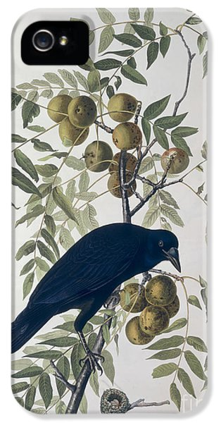 American Crow IPhone 5s Case