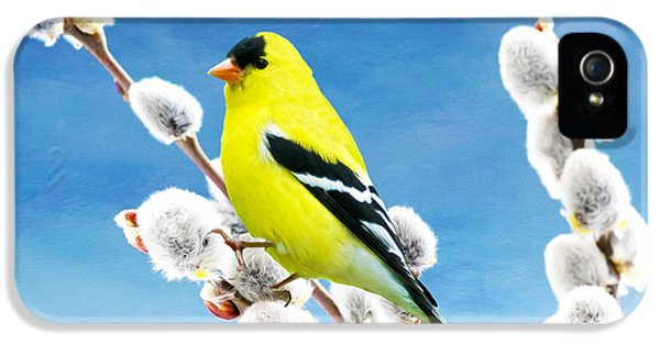 Finch iPhone 5s Case - American Goldfinch Perched On Pussy Willow by Laura D Young