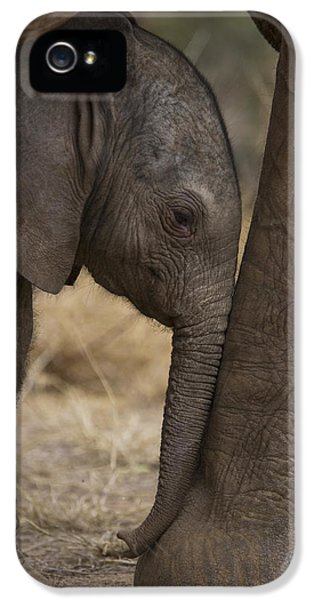 Elephant iPhone 5s Case - An Elephant Calf Finds Shelter Amid by Michael Nichols
