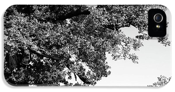 iPhone 5s Case - Ancient Oak, Bradgate Park by John Edwards