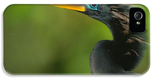 Anhinga iPhone 5s Case - Anhinga Anhinga Anhinga, Tortuguero by Panoramic Images