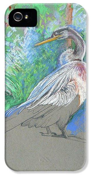 Anhinga iPhone 5s Case - Anhinga Sarasota Plein Air by Catherine Twomey