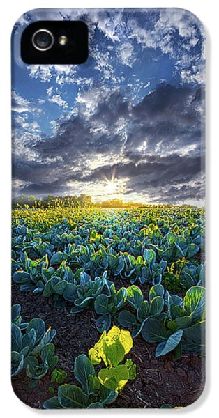 Cabbage iPhone 5s Case - Ankle High In July by Phil Koch