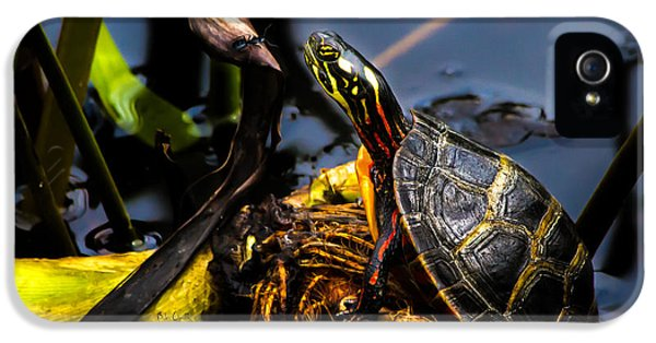 Ant Meets Turtle IPhone 5s Case by Bob Orsillo