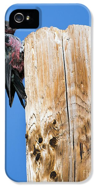 Any Tree Will Do IPhone 5s Case