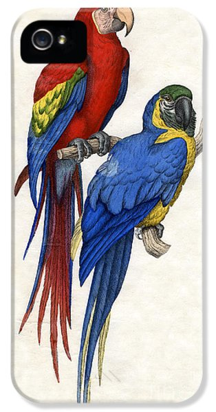 Aracangua And Blue And Yellow Macaw IPhone 5s Case