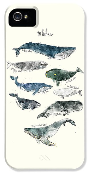 Whales IPhone 5s Case