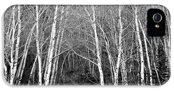 Aspen Forest Black And White Print IPhone 5s Case