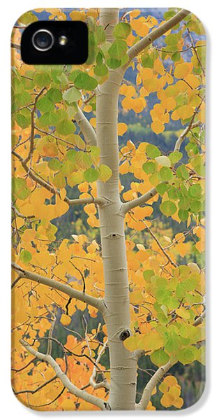 Aspen Watching You IPhone 5s Case