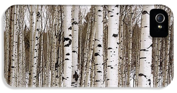 Mountain iPhone 5s Case - Aspens In Winter Panorama - Colorado by Brian Harig