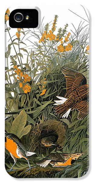 Audubon: Meadowlark IPhone 5s Case by Granger