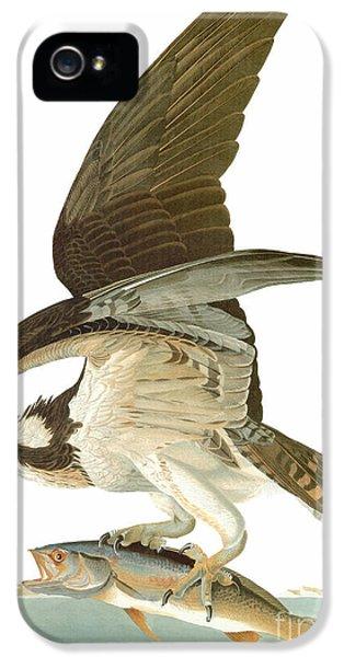 Osprey iPhone 5s Case - Audubon: Osprey by Granger