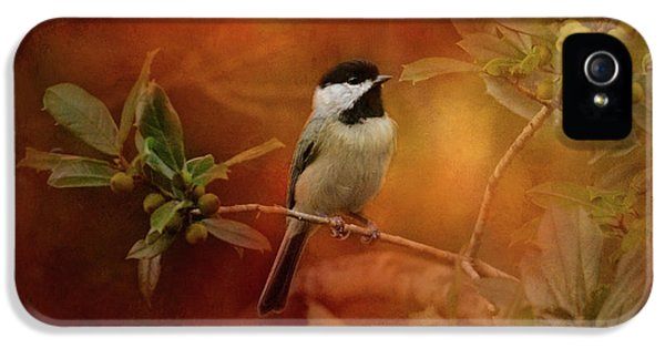 Autumn Day Chickadee Bird Art IPhone 5s Case by Jai Johnson