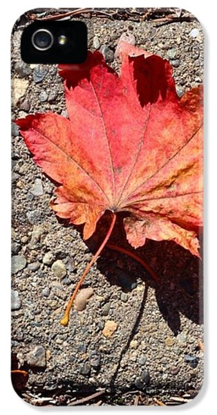 Orange iPhone 5s Case - Autumn Is Here by Blenda Studio