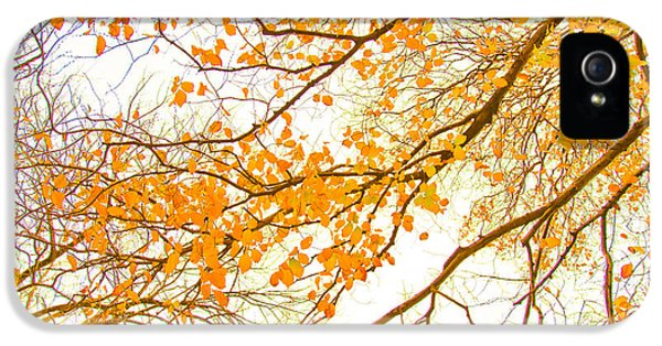 Featured Images iPhone 5s Case - Autumn Leaves by Az Jackson